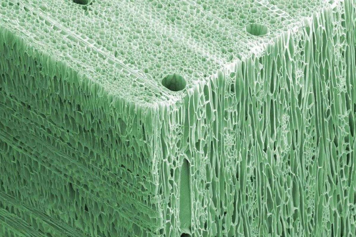 بافت چوب در میکروسکوپ الکترونی